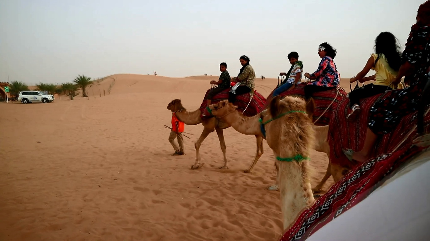 four camels in a line each carrying two passengers during a desert safari experience in dubai
