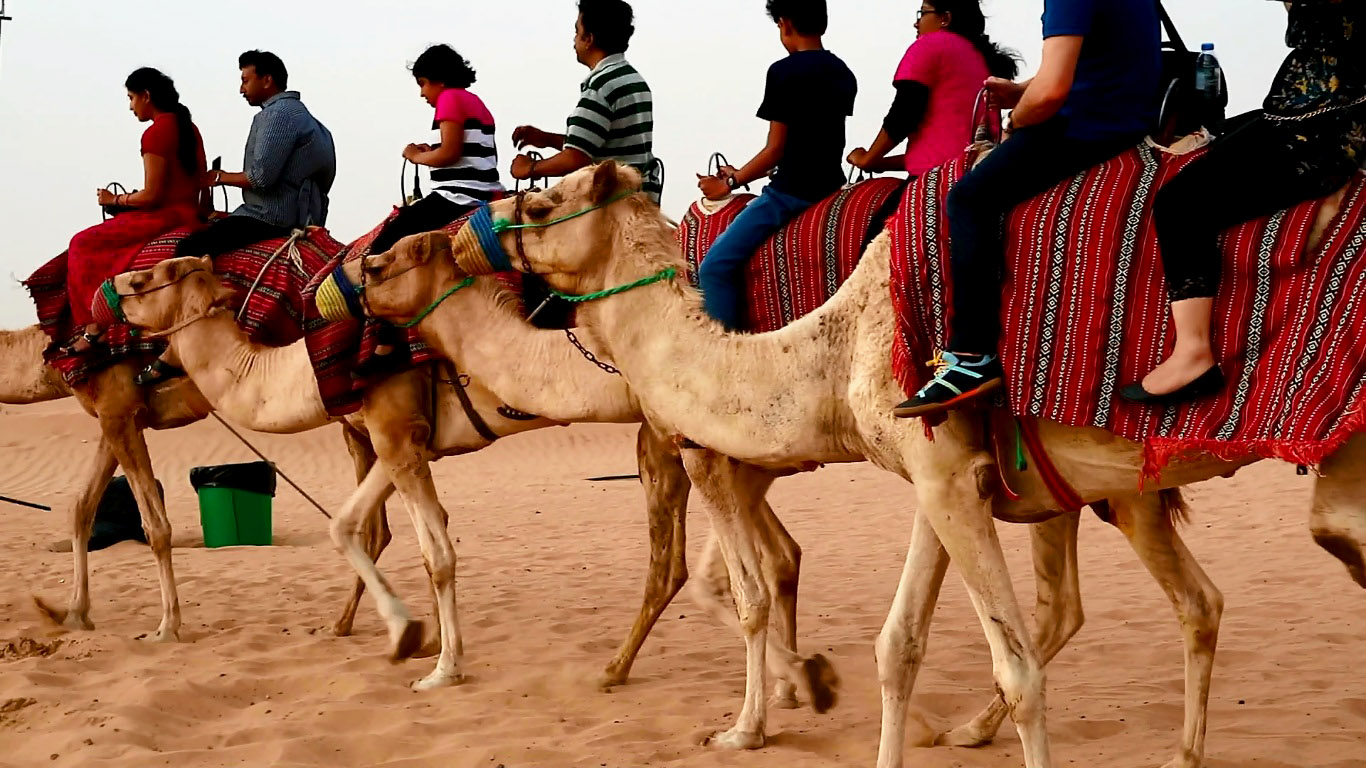 a line of 4 camels tied to each other and carrying people on the backs