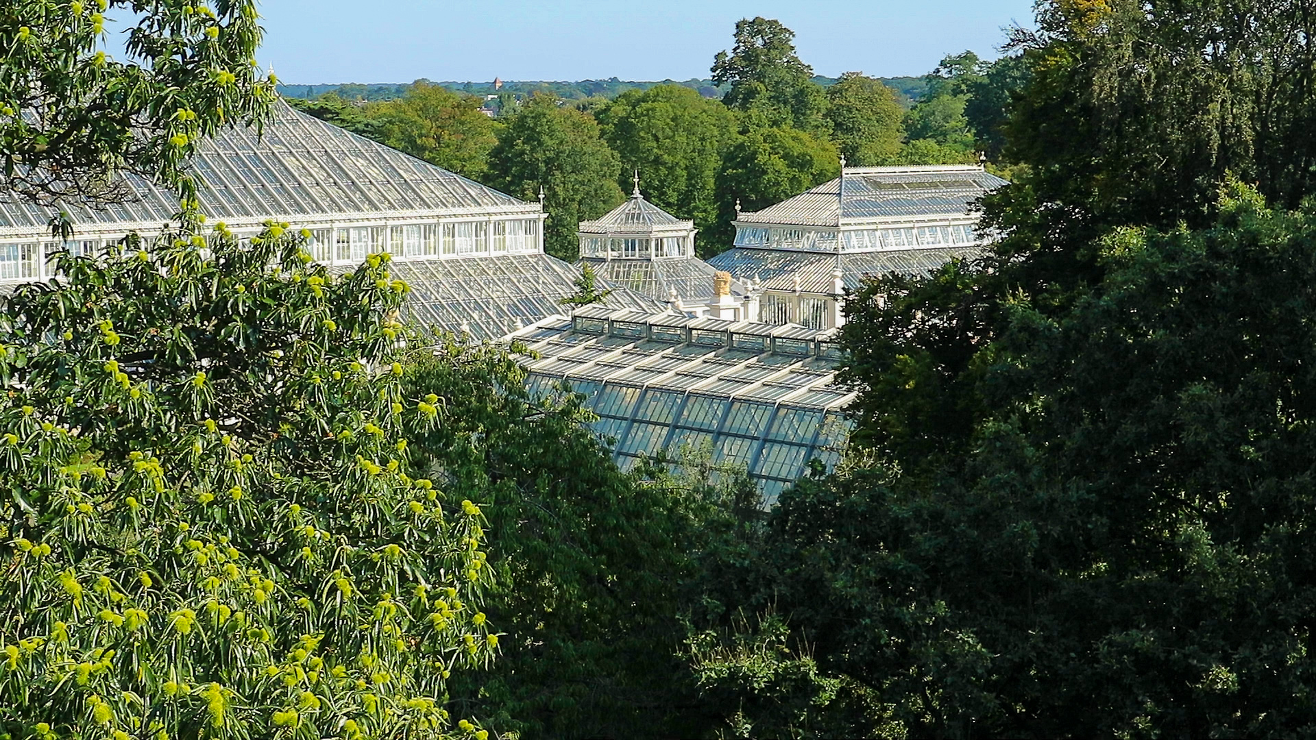 Trees and a building viewers from the top of the Treetop Walkway in royal botanical gardens in Kew London