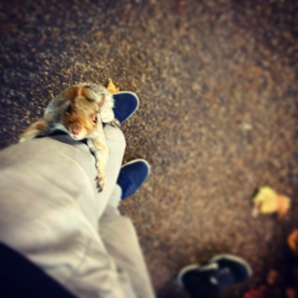 A squirrel on a road climbing up a man's grey trousers
